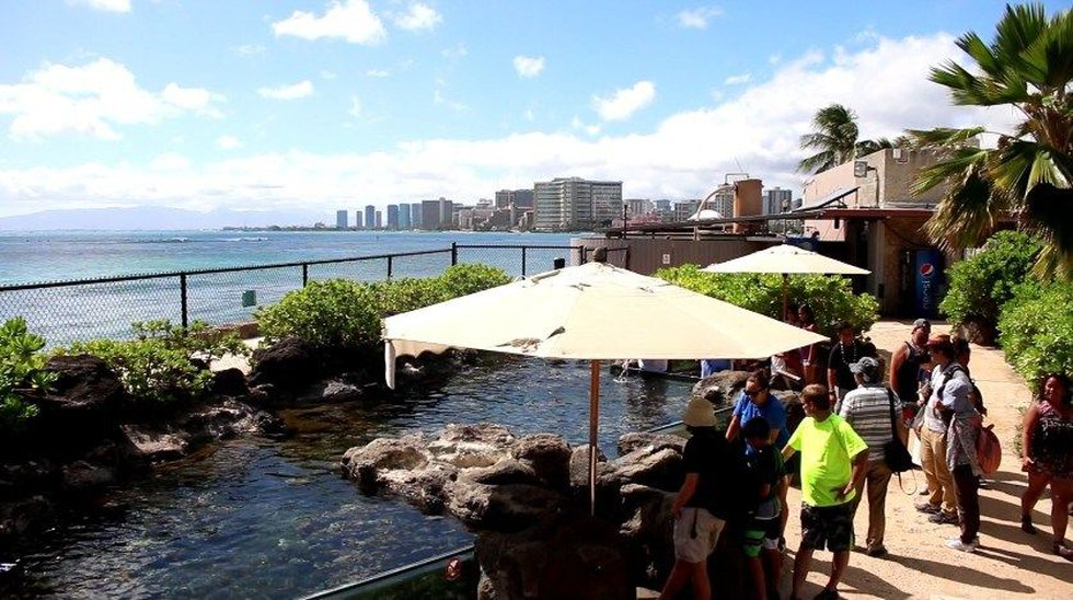 The ocean backs up to the aquarium's outside exhibits (Image: Hawaii News Now)