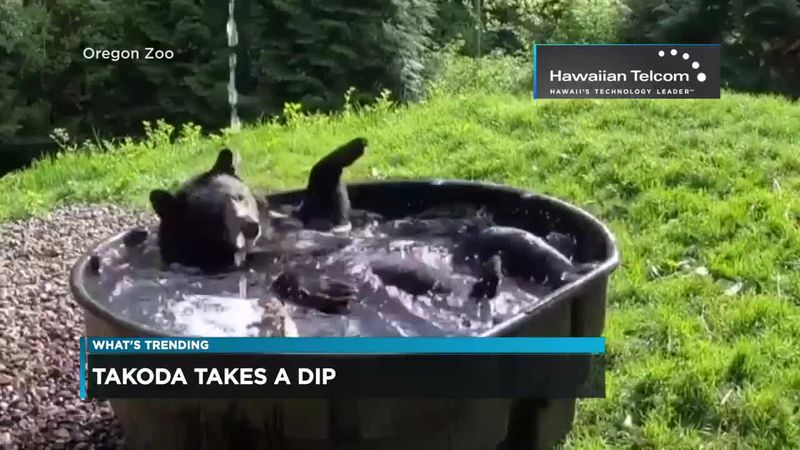 What's Trending: Animals and Water