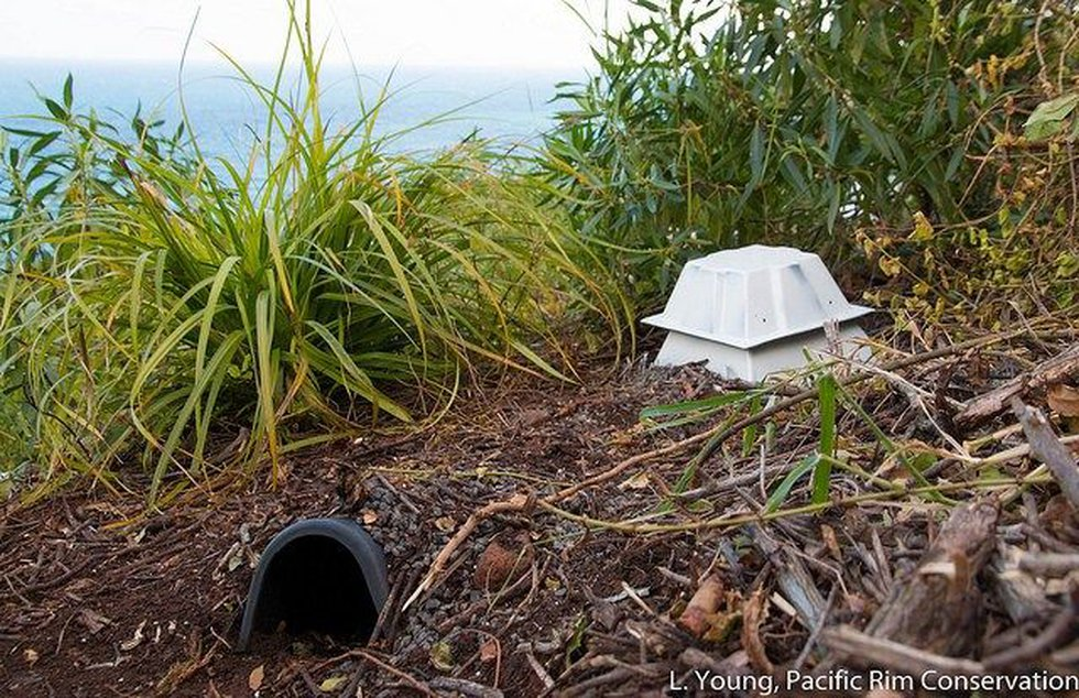 A man-made burrow within the Refuge is pictured (Image: USFWS)