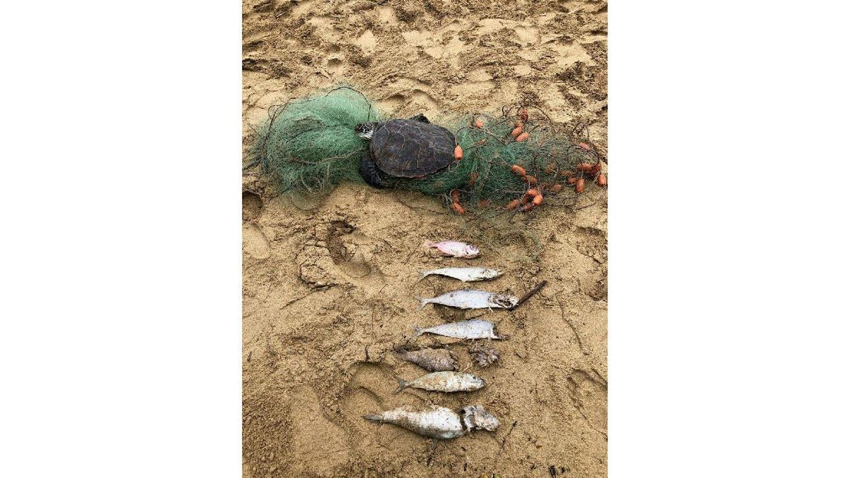 The dead honu and other fish were found entangled in the net.