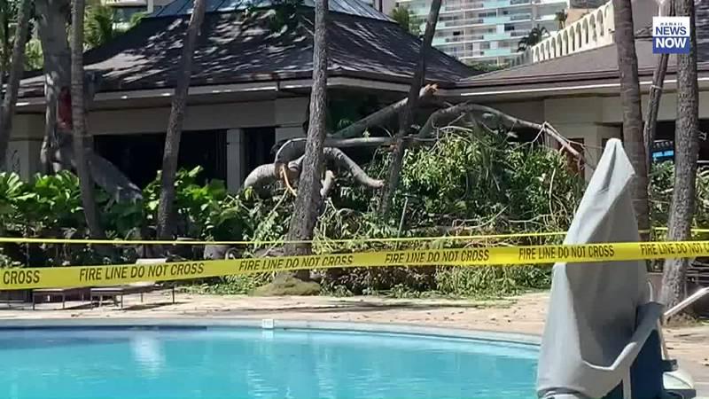 7 people injured after large tree branch breaks off, crashes at Waikiki hotel