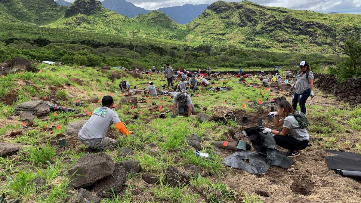 Dozens f volunteers got down and dirty to plant roughly 750 trees on Oahu's west side.