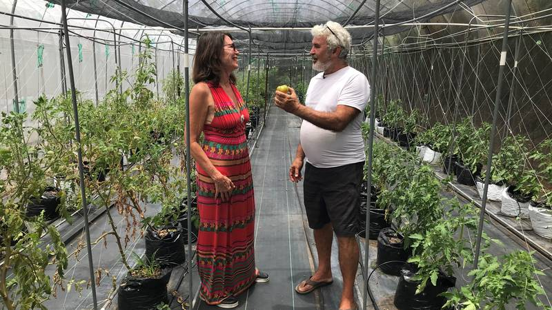 Pamela Boyar, managing director of Farmlovers Markets, checks out organic produce at Bruce...
