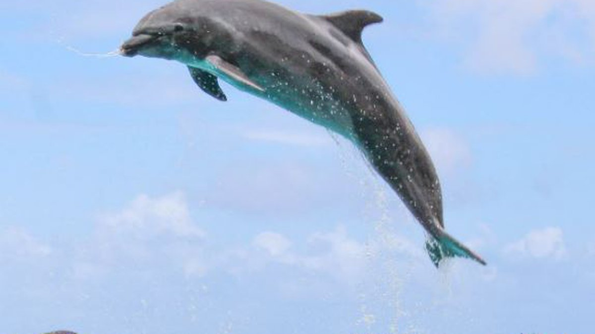 (Image: Sea Life Park)