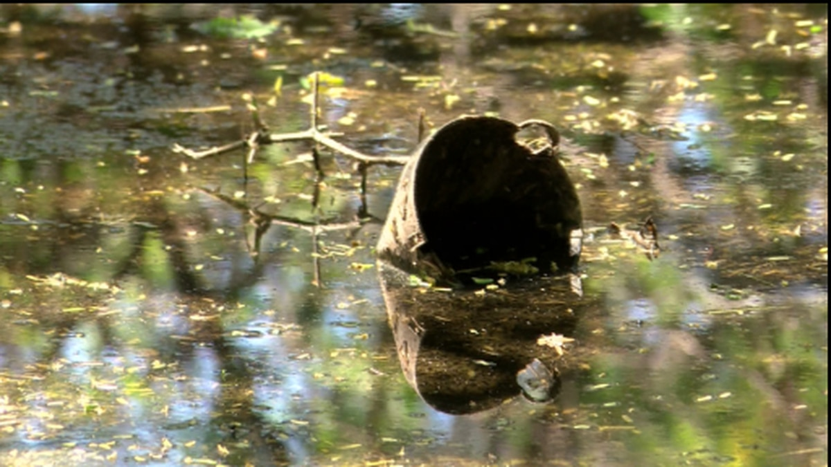 The green algae bloom indicates that that a broken wastewater pipe at the Sand Island Beach...