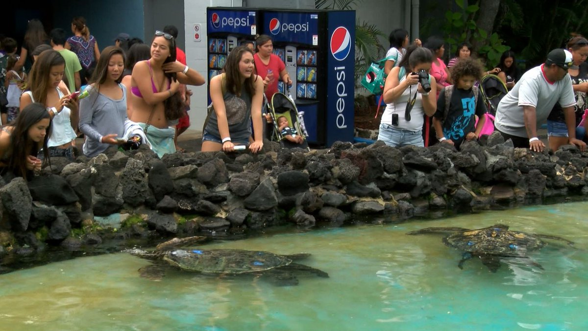 Sea Life Park is a popular Oahu attraction for locals and visitors.