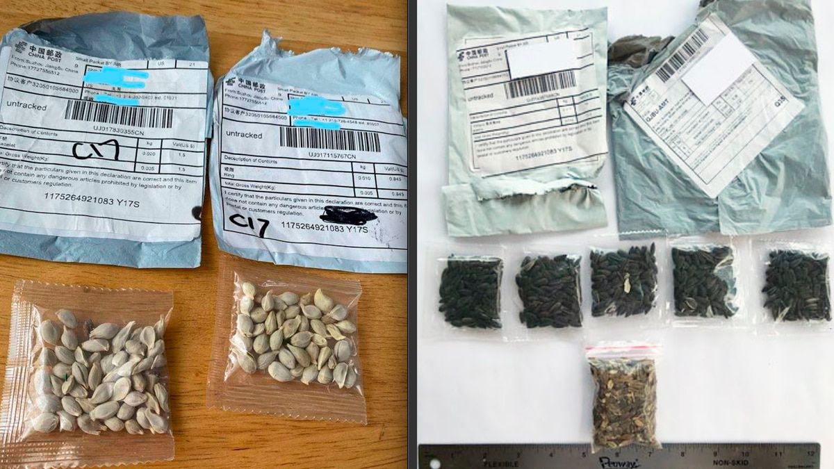 Photos of the package and seeds intercepted on the mainland.