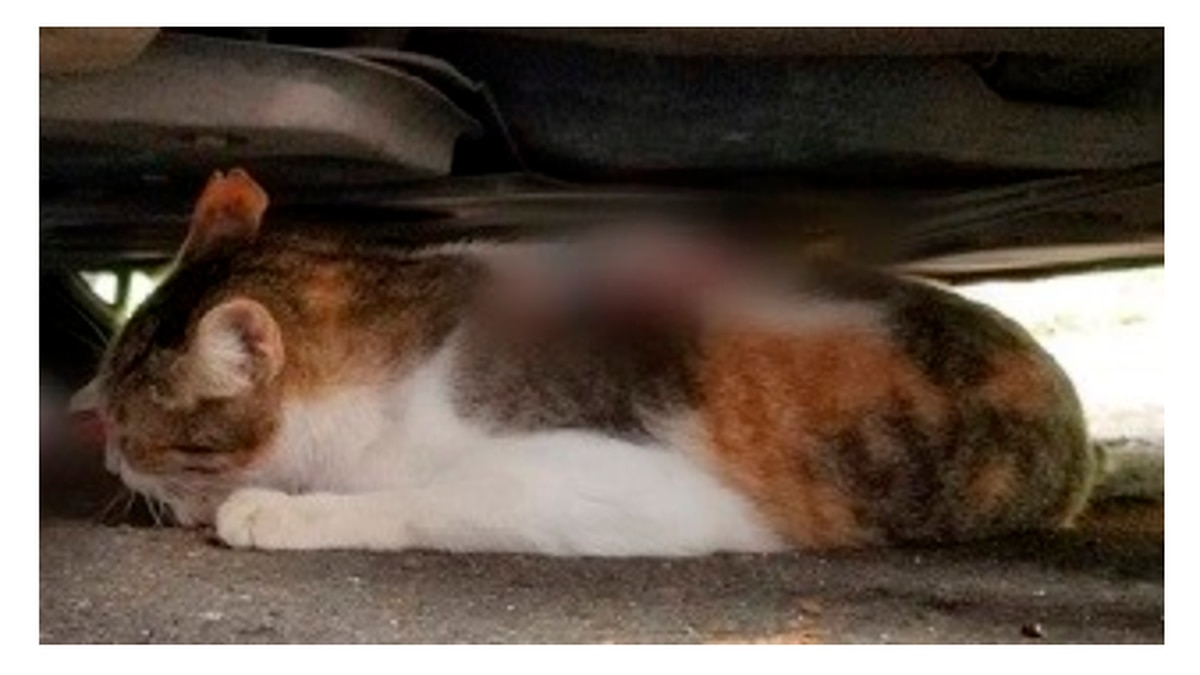 The cat was found badly injured, but is expected to fully recover.