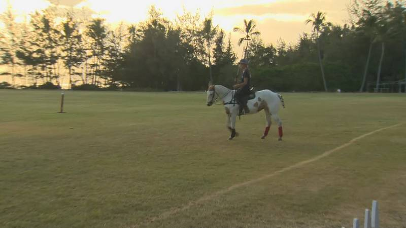 Hawaii Polo Club is back up and running again after a tough year.