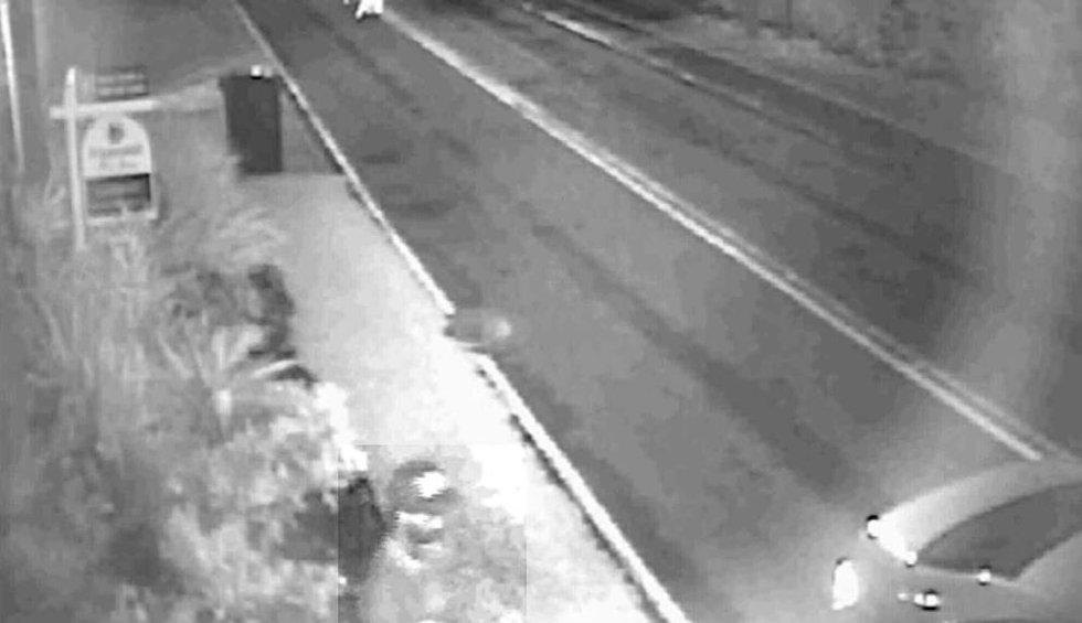 Kealoha mailbox thief