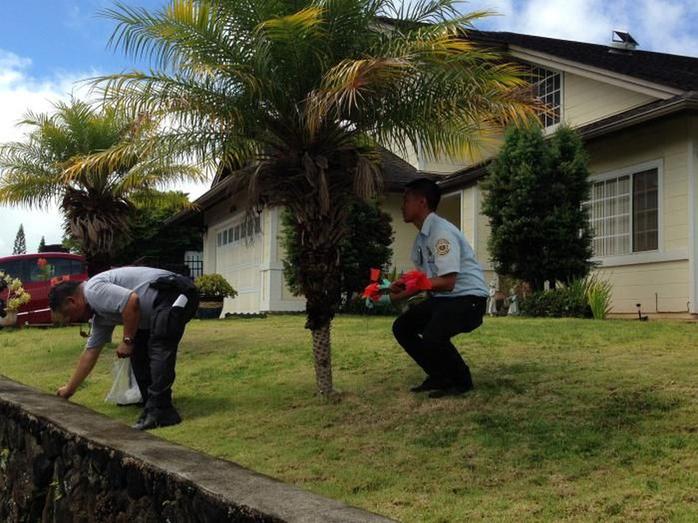 An residential infestation of stinging little fire ants has been discovered in Mililani Mauka