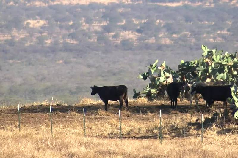 The dry summer has gone from bad to worse for farmers and ranchers on Maui. The latest drought...