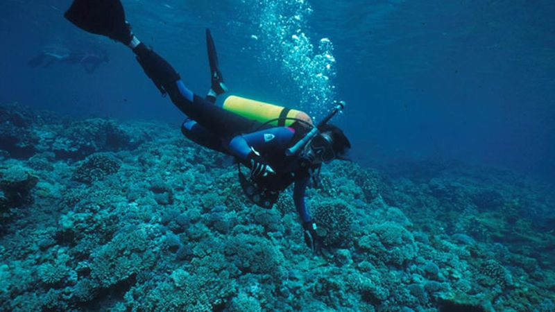Diver with coral.