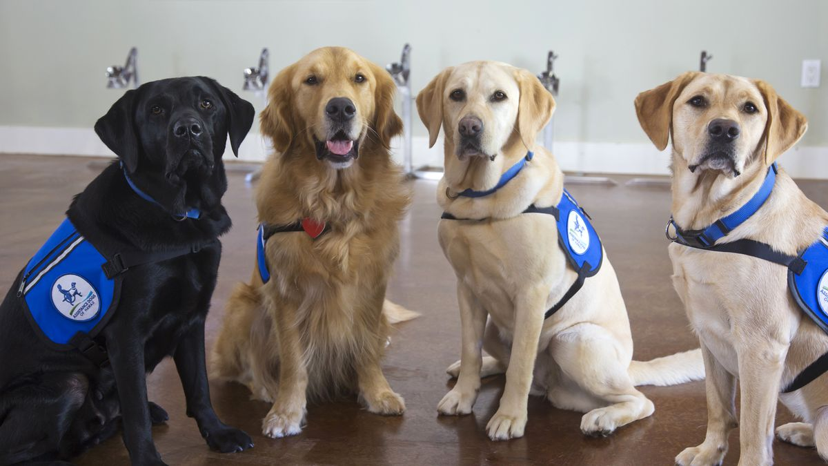 COVID Sniffing Dogs