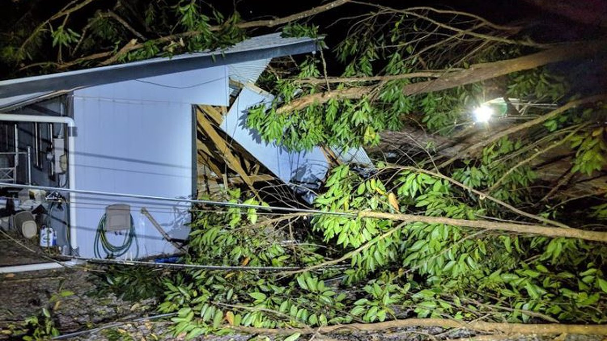 A tree fell on this Hilo home early Monday during strong winds that battered the state. (Image:...
