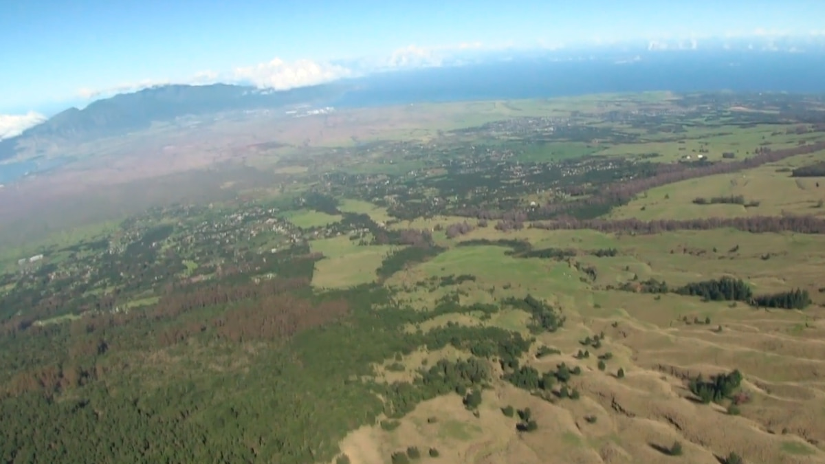 Kamehamenui Forest from above
