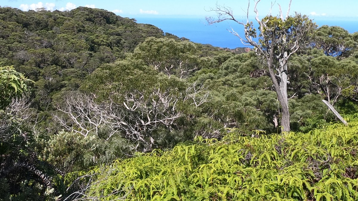 The state said it is pledging to plant, conserve and restore 10 million trees each year of this...