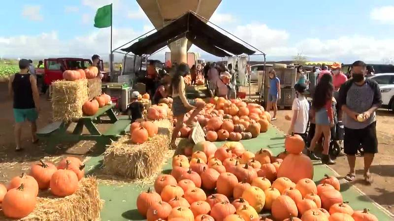 No reservations are required and there is no entry fee, but prices of the pumpkins themselves...