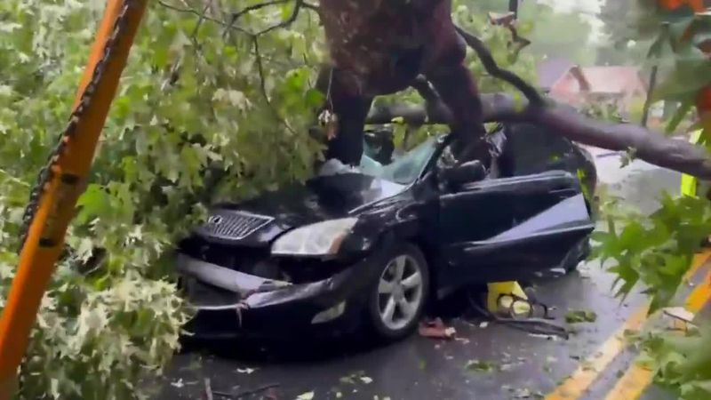 A woman escaped with injuries after a huge oak swatted her car while she was driving in Atlanta...