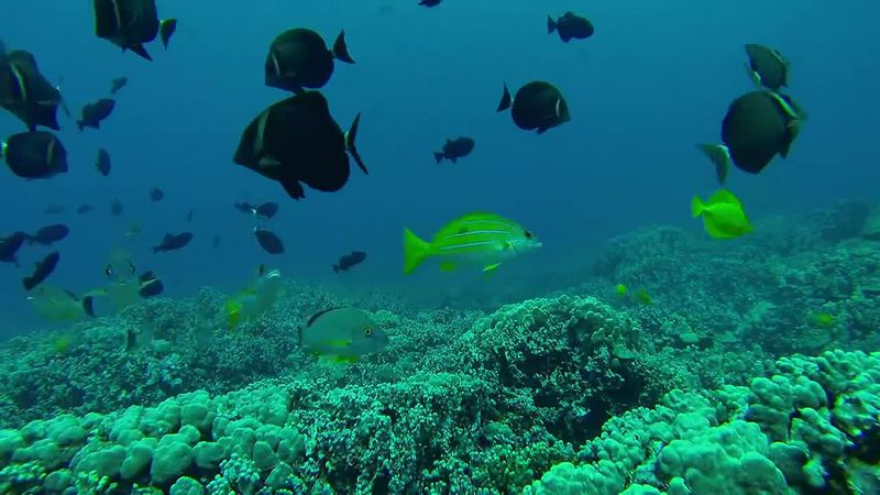 In a recent study of underwater ecosystems, researchers made the grim discovery that coral...