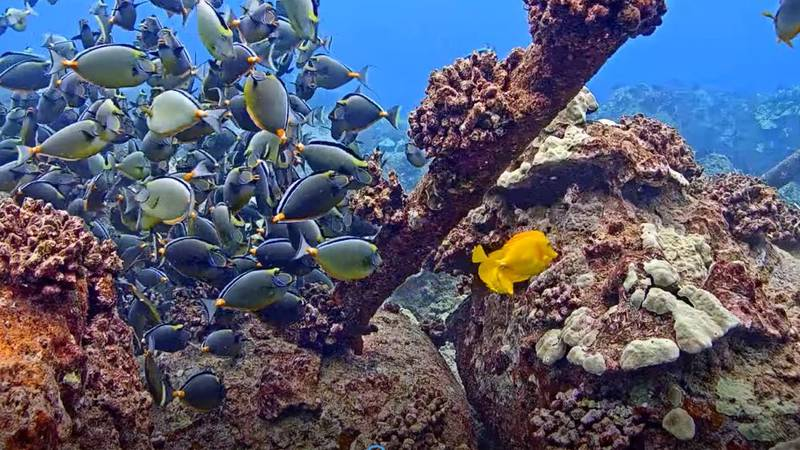 UH Hilo's MEGA Lab installed a high-definition camera off Keahole Point. The live feed...