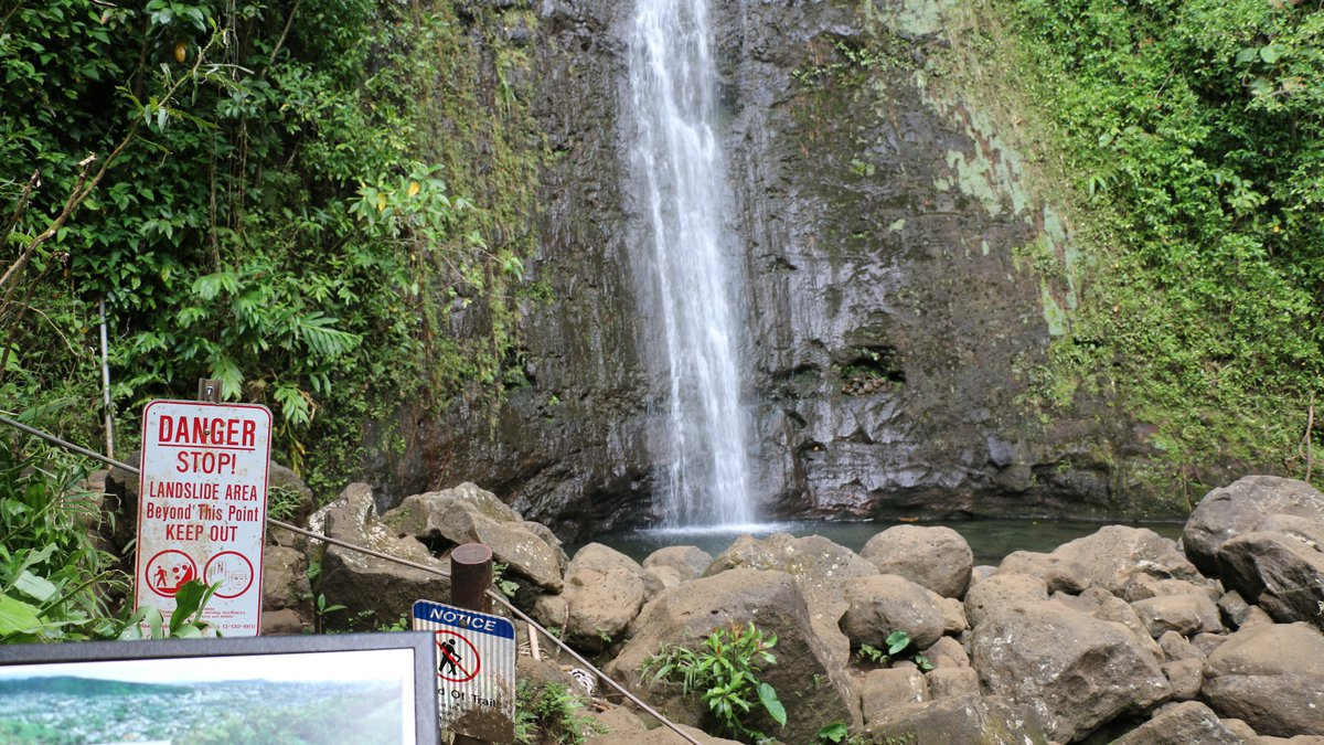 Manoa Falls Trail will undergo improvements starting in mid-July. (Image: State Department of...