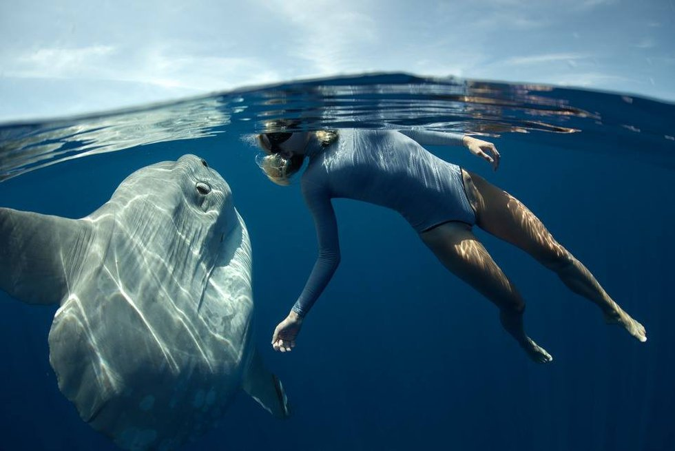 Basking in the sun: Katie Pentz (and the Mola mola) drift near the ocean's surface to bask in...