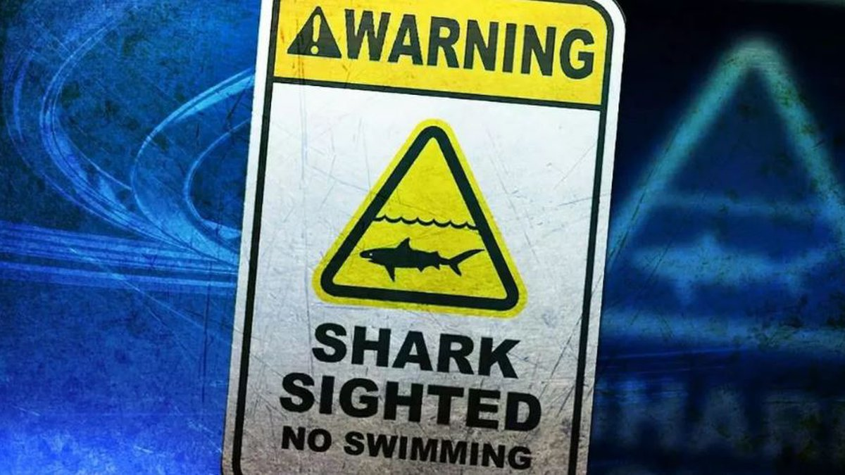 Shark sighting reported Saturday, ocean safety officials say.