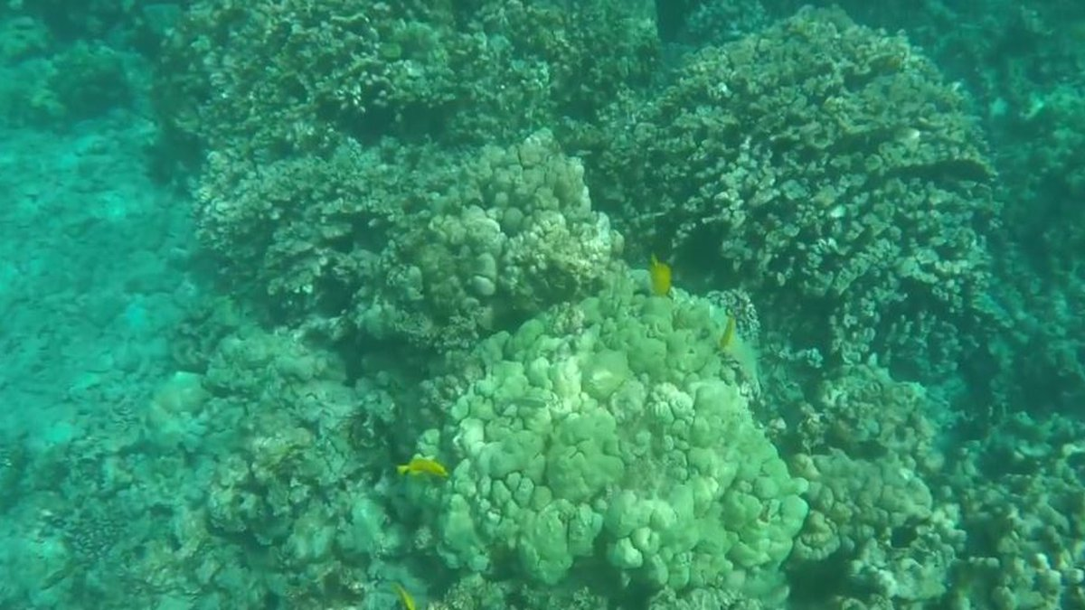 The DLNR captures this image of coral bleaching off Kealakekua Bay State Historical Park on...