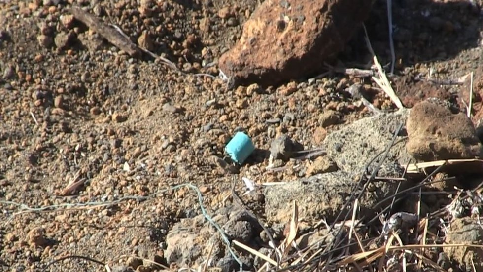 State officials say the poison pellets are mostly non-toxic. (Image: DLNR)