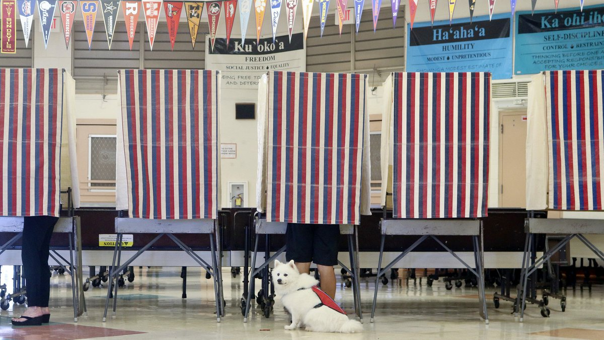A service animal waits patiently while its owner votes, Saturday, Aug. 11, 2018, at polling...